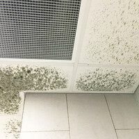 The Risk of Mold Growth After Building Shutdown